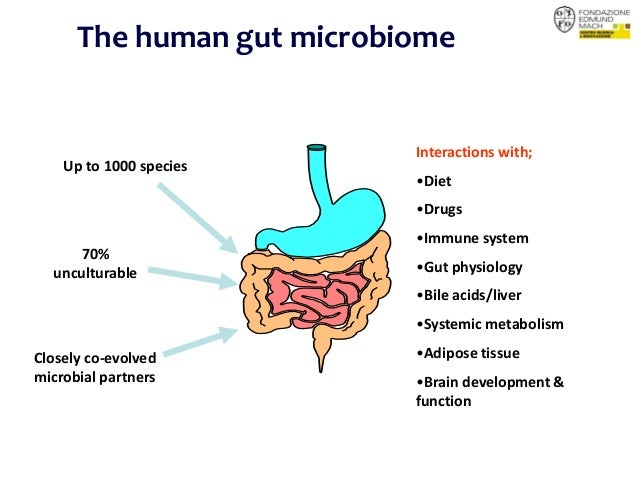 DIET AND THE GUT MICROBIOTA