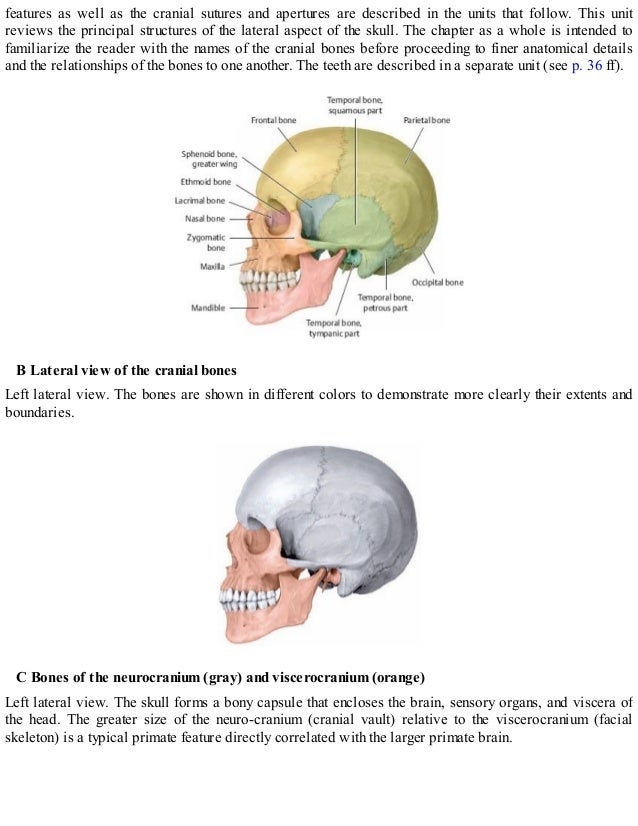 Nice Temporal Bones Anatomy Picture Collection - Anatomy Ideas ...