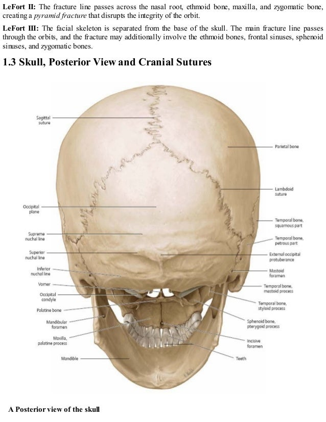 Atlas Skull Diagram - Circuit Connection Diagram •