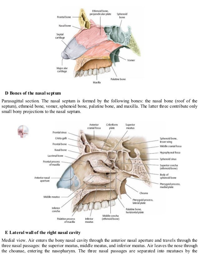 Thieme, Atlas of Anatomy