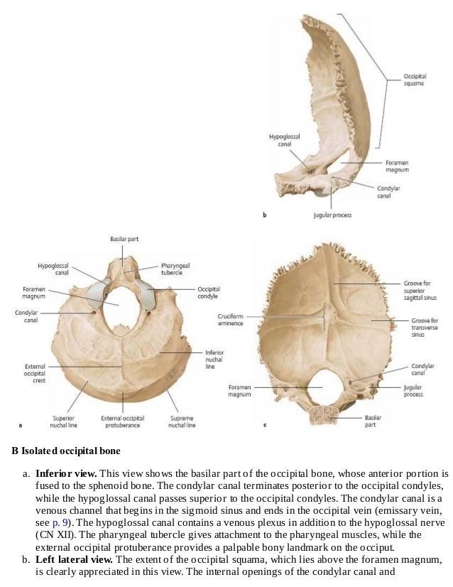 Thieme, Atlas of Anatomy