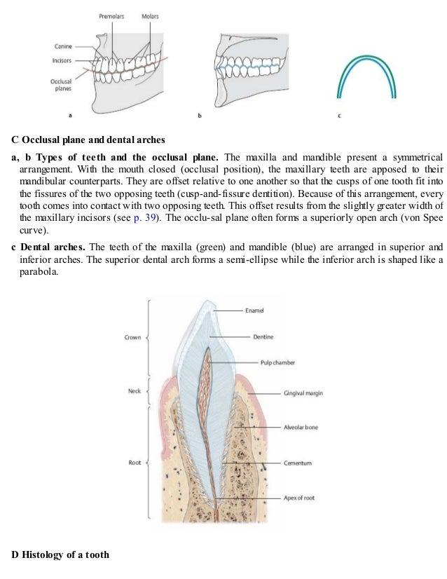 Erfreut Panorama Dental Anatomie Galerie - Anatomie Ideen - finotti.info