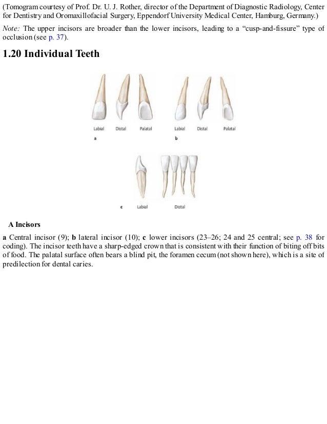 Ungewöhnlich Panorama Dental Anatomie Galerie - Anatomie Von ...