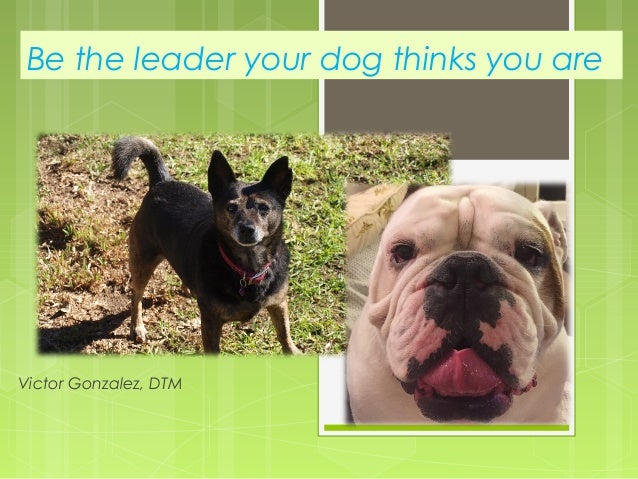 Be the leader your dog thinks you are Victor Gonzalez, DTM