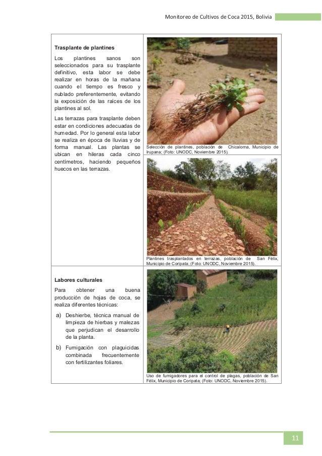 Monitoreo De Cultivos De Coca 2015