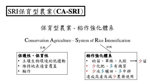 SRI保育型農業(CA-SRI) 保育型農業 - 稻作強化體系 Conservation Agriculture – System of Rice Intensification 稻作強化體系 • 幼苗、單株、大距 • 少化肥、多有機質 • 少...