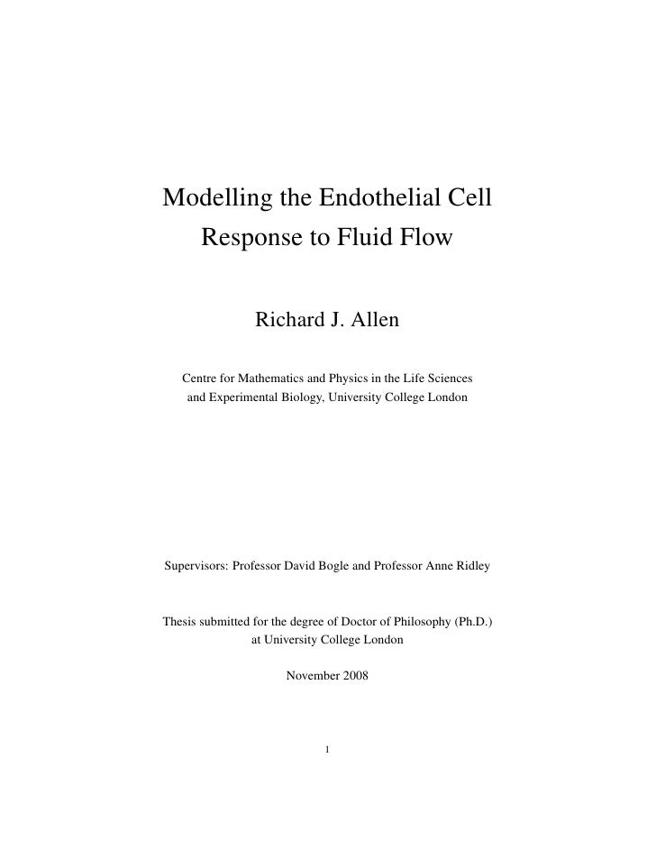 Modelling the Endothelial Cell       Response to Fluid Flow                 Richard J. Allen   Centre for Mathematics and ...