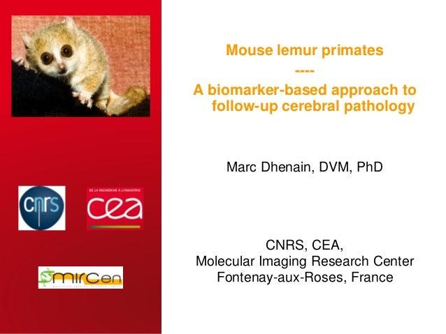 CEA   31 OCTOBER 2014 Mouse lemur primates ---- A biomarker-based approach to follow-up cerebral pathology CNRS, CEA, Mole...