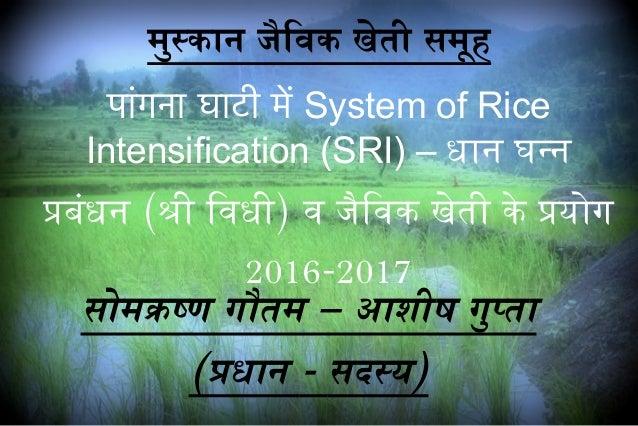मुस्कान जैविविक खेती समूह पांगना घाटी में System of Rice Intensification (SRI) – धान घन्न प्रबंधन (श्री िविधी) वि जैविविक ...