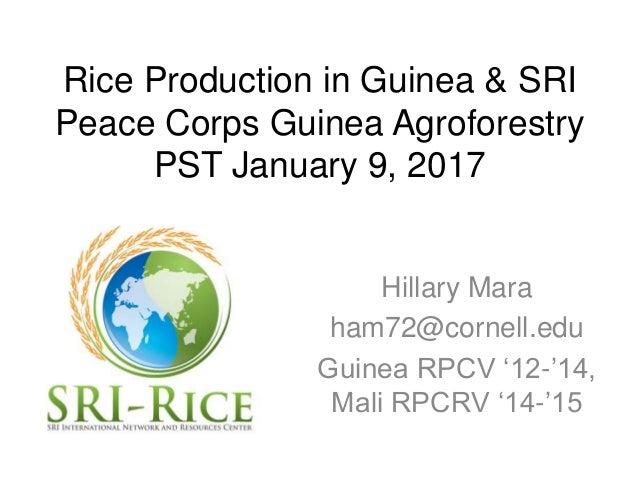 Rice Production in Guinea & SRI Peace Corps Guinea Agroforestry PST January 9, 2017 Hillary Mara ham72@cornell.edu Guinea ...