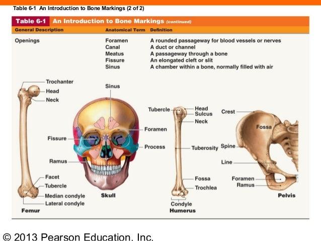 Fissure Bone Marking Diagram Block And Schematic Diagrams