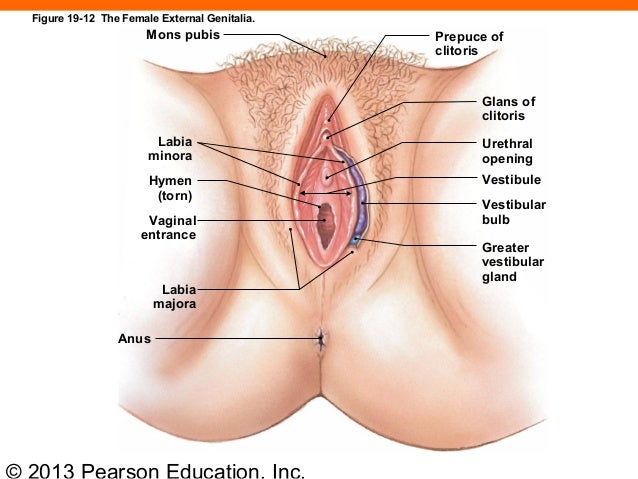 Physical features that happen when you lose your virginity