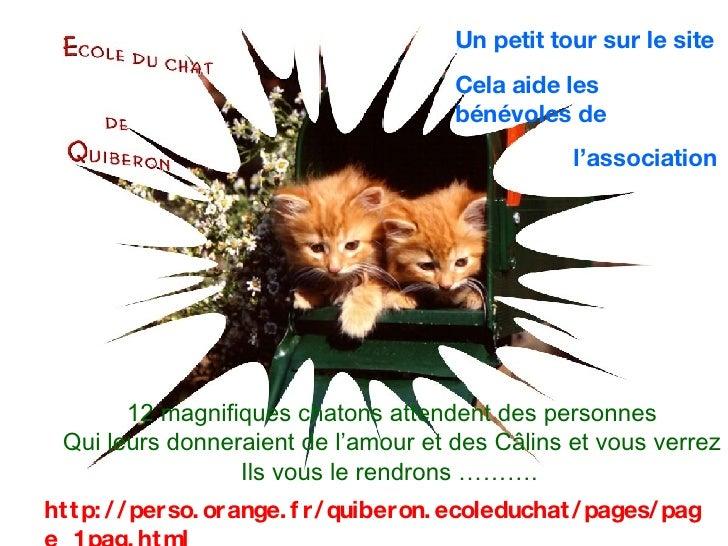 http://perso.orange.fr/quiberon.ecoleduchat/pages/page_1pag.html Un petit tour sur le site  Cela aide les bénévoles de  l'...