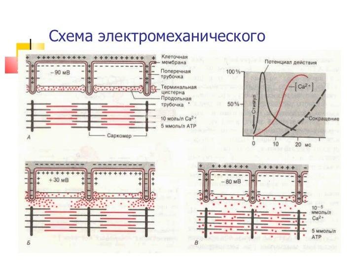 Схема электромеханического сопряжения