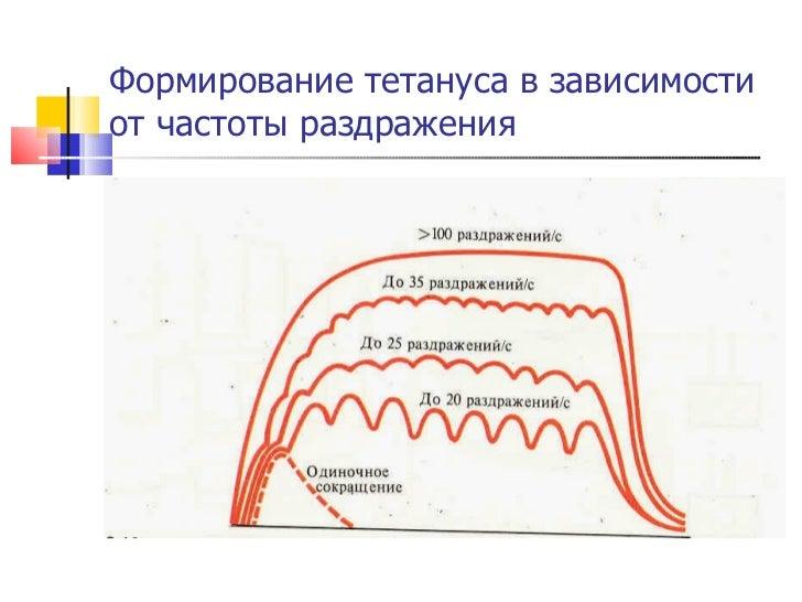 Формирование тетануса в зависимости от частоты раздражения