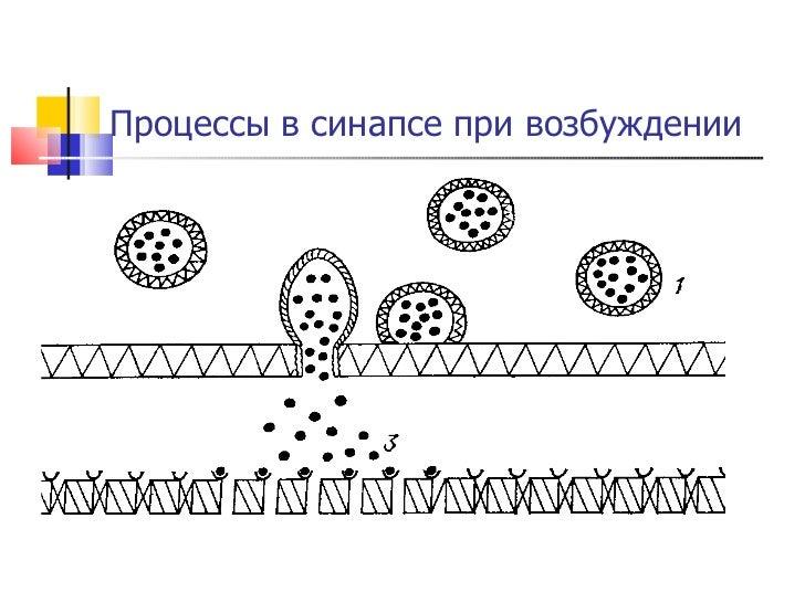 Процессы в синапсе при возбуждении