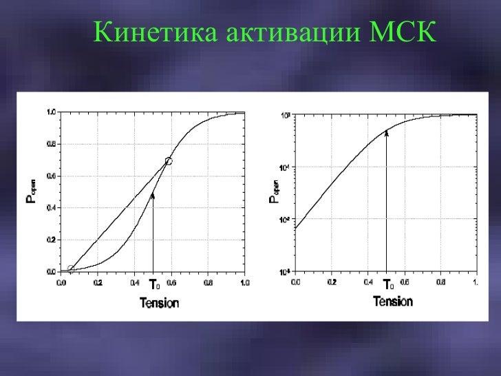 Кинетика активации МСК