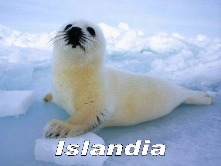 Curiosidades de Islandia•. Los islandeses no tienen un apellido, por lo que usan un prácticosistema por el cual combinan e...
