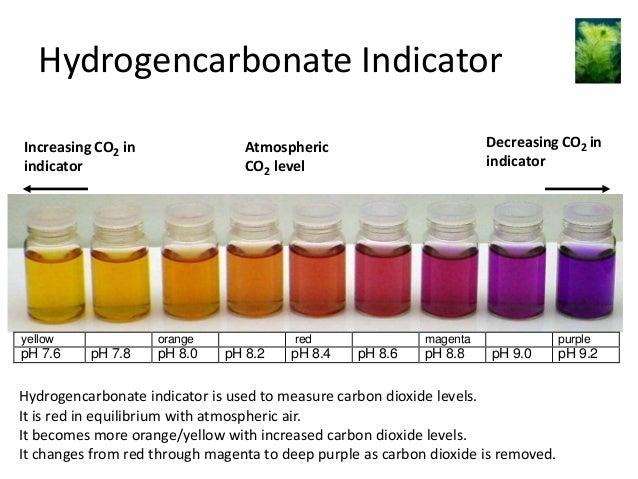 Hydrogencarbonate Indicator Increasing CO2 in indicator  yellow  pH 7.6  orange  pH 7.8  Decreasing CO2 in indicator  Atmo...