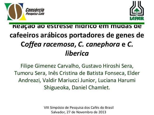 Reação ao estresse hídrico em mudas de cafeeiros arábicos portadores de genes de Coffea racemosa, C. canephora e C. liberi...