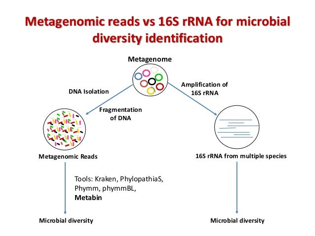 4 metagenomic reads vs 16s rrna