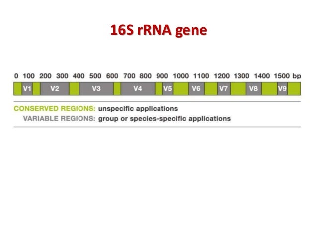 underestimated diversity 6 16s rrna