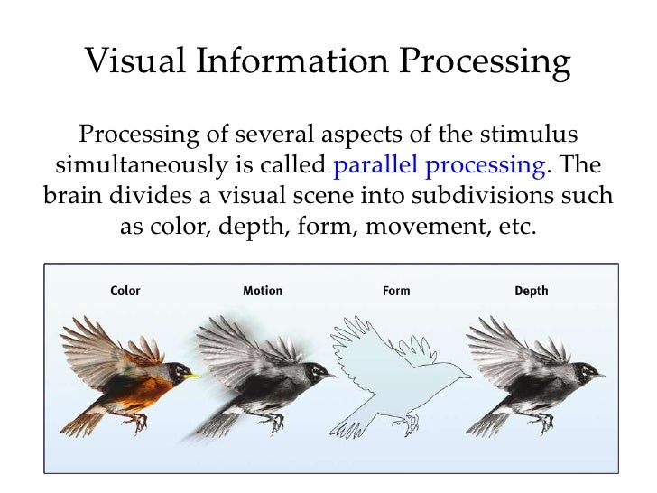 vision and perception Lecture 16 from a college level introduction to psychology course taught fall 2011 by brian j piper, phd (psy391@gmailcom) at willamette university, includ.