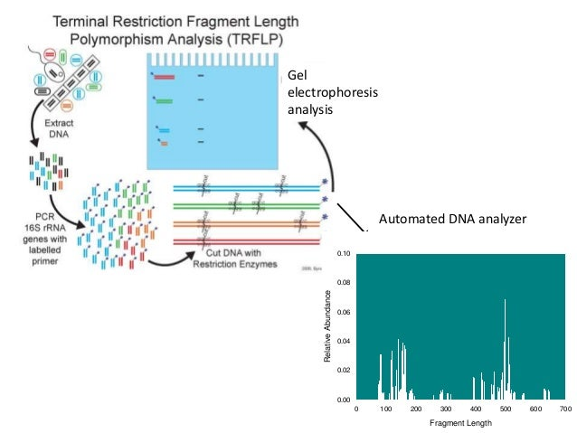 sequence analysis Analysis examples from mothur  sanger 16s rrna sequence analysis esophageal community analysis - contributed by pat schloss[only for historical reference.