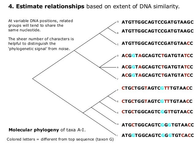 how to draw a phylogenetic tree dna