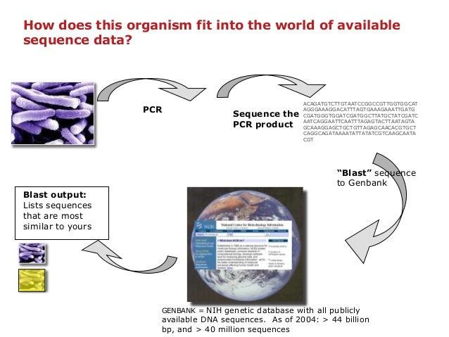 16S Ribosomal DNA Sequence Analysis