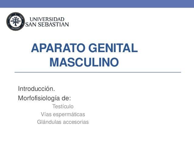 APARATO GENITAL      MASCULINOIntroducción.Morfofisiología de:            Testículo       Vías espermáticas      Glándulas...