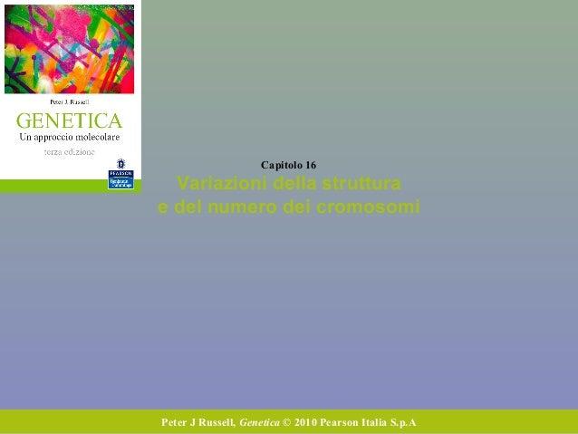Capitolo 16 Variazioni della struttura e del numero dei cromosomi Peter J Russell, Genetica © 2010 Pearson Italia S.p.A