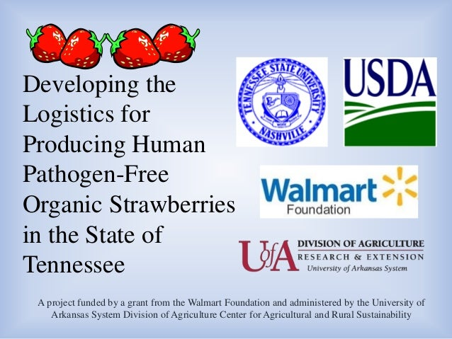 Developing the Logistics for Producing Human Pathogen-Free Organic Strawberries in the State of Tennessee A project funded...