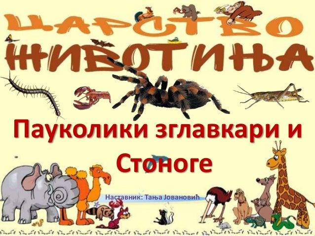 Пауколики зглавкари и Стоноге Наставник: Тања Јовановић