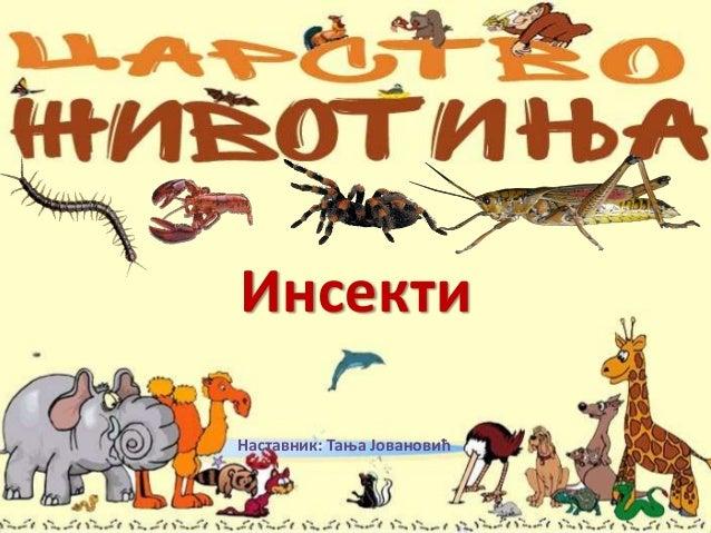 Инсекти Наставник: Тања Јовановић