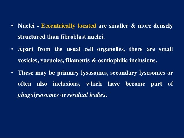 • Nuclei - Eccentrically located are smaller & more densely structured than fibroblast nuclei. • Apart from the usual cell...