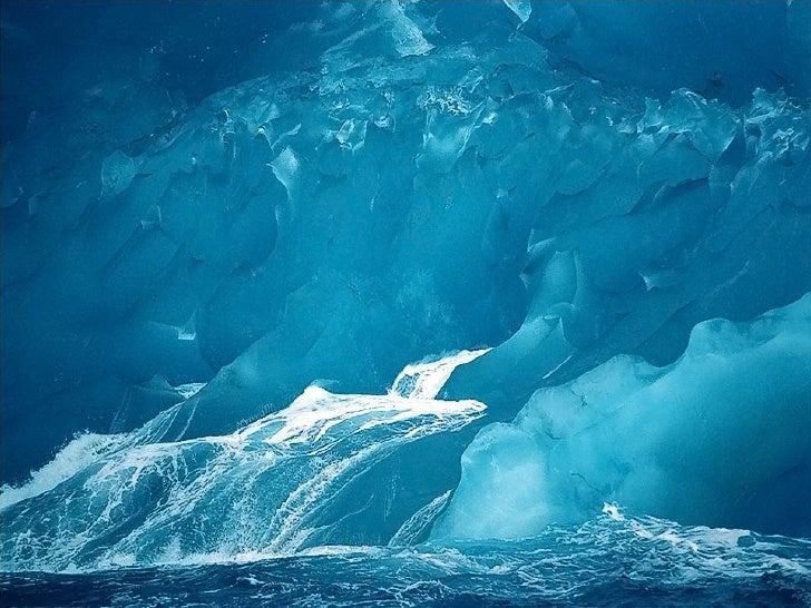 Malgré son rude climat, lecontinent antartique estpourvu d'une faune très richequi s'est étonnammentadaptée.