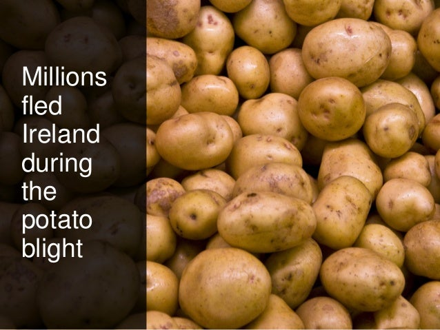 Millions fled Ireland during the potato blight