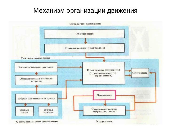 Механизм организации движения