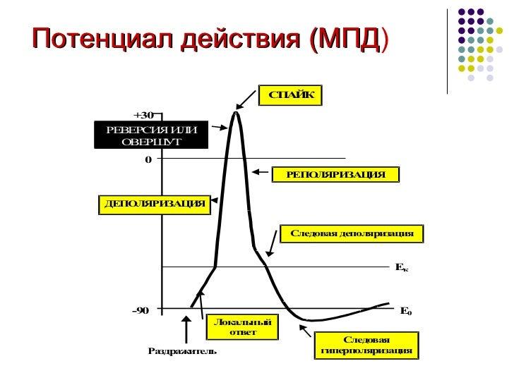 Потенциал действия (МПД )