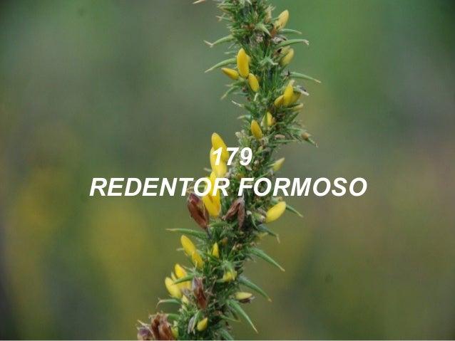 179 REDENTOR FORMOSO