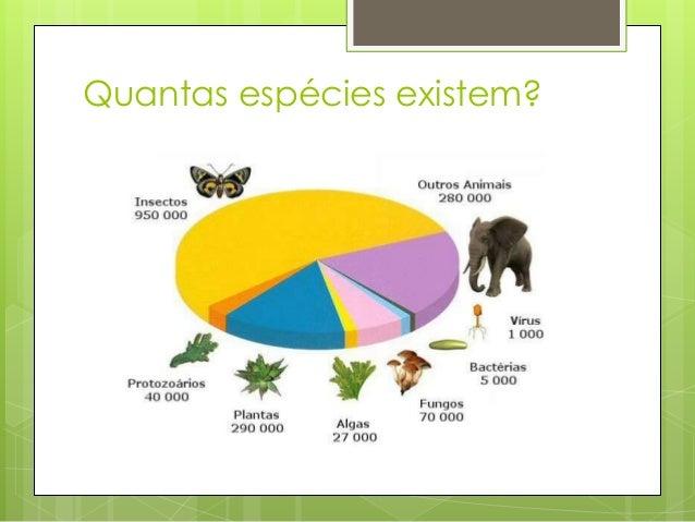 Pan paniscus (bonobo) Pan troglodytes (chimpanzé) Semelhanças morfológicas não indicam que os indivíduos são da mesma espé...