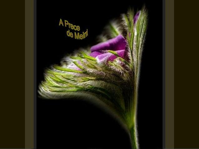 Faze-me perceber    que o trabalho do bem me aguarda em toda parte.Não me consintas perder tempo,através de indagações in...