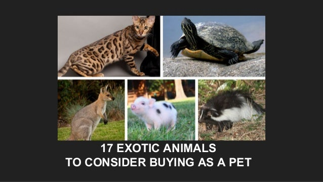17 EXOTIC ANIMALS TO CONSIDER BUYING AS A PET