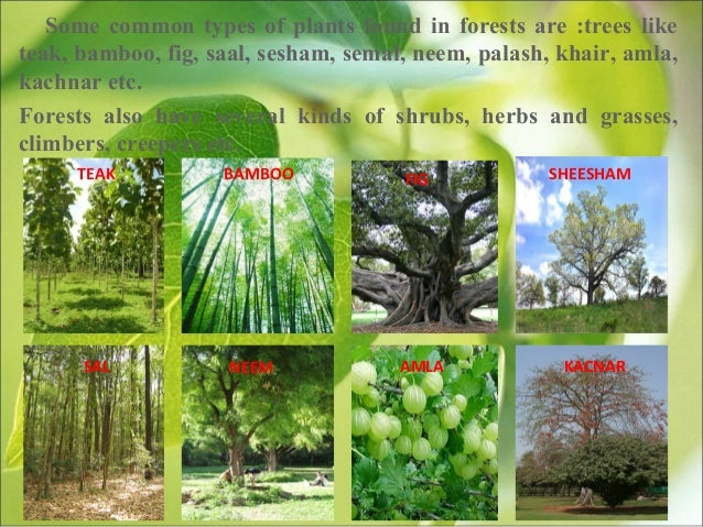 our trees our lifeline Trees are very useful in our life trees are our best friends they play a very important role in our life we can not live without them trees save water.