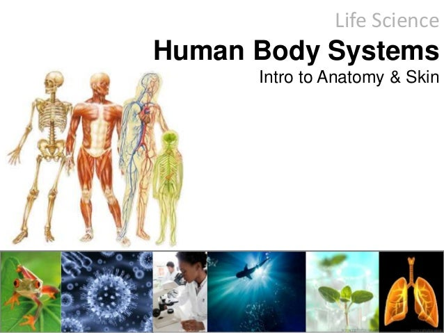 Life Science Human Body Systems Intro to Anatomy & Skin