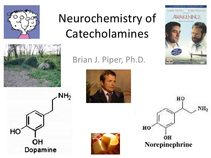 Neurochemistry of Catecholamines  Brian J. Piper, Ph.D.                      Norepinephrine