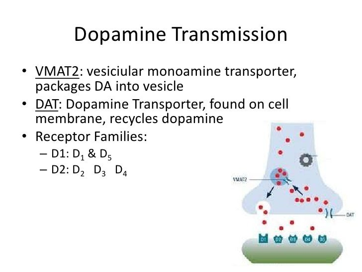 Dopamine Transmission• VMAT2: vesiciular monoamine transporter,  packages DA into vesicle• DAT: Dopamine Transporter, foun...