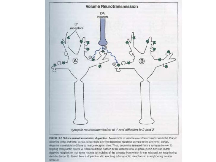 Dopamine Neuroanatomy 1              Mesocortical• Label: Soma-Axon Location, Mesencephalon-Cortex• Important for Schizoph...