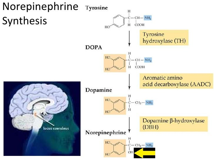 Adrenergic Receptors• α : α1 α2• β : β1 β2